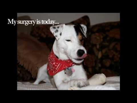Knee Surgery for Lucky Dog!