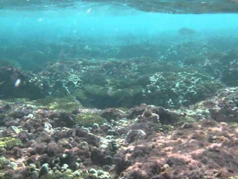 Snorkeling in Christmas Island, Kiribati