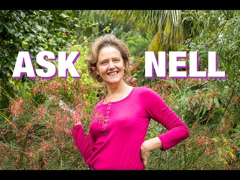 Ask Nell:  Ants In & Around Your Plants