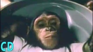 Animal Astronauts - The Space Race