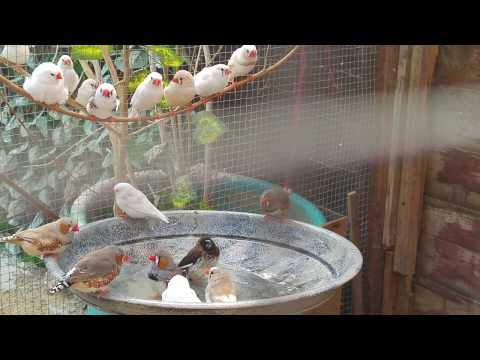Remember to keep your birds COOL!
