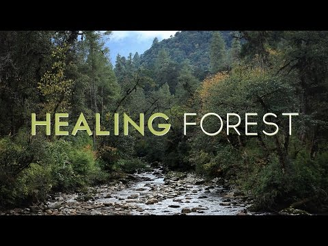 How forests heal people.