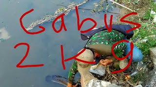 paser ikan gabus 2 kg,kena kepala tanpa perlawanan... sungai mati bengawan solo..sukoharjo.
