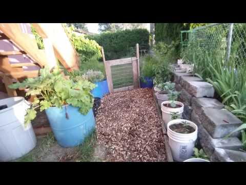 Graham's Garden Allotment update (#53)