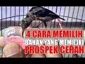 Tips Memilih Burung Kolibri Bahan Yang Memiliki Mental Juara (konin)