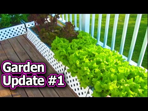 Container Garden Update #1 Vegetable Gardening Raised Bed Square Foot Tomato Plants