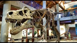 Download Delhi science museum.must visit (#1st vlog) Video