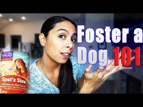 Foster Dog 101: Getting Started, Cost and Common Questions!