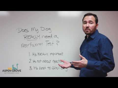 Does My Dog Really Need a Heartworm Test?