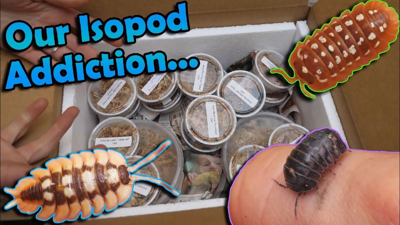 Unboxing $1,000 Worth of Isopods!