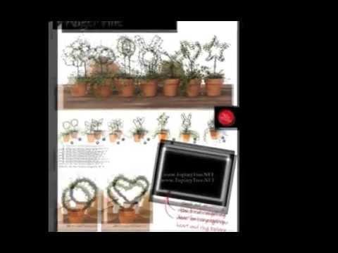 Live Topiary Plants!