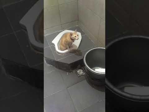 Xxx Mp4 Mimi Pipis D Toilet Qfoodnmusic 3gp Sex
