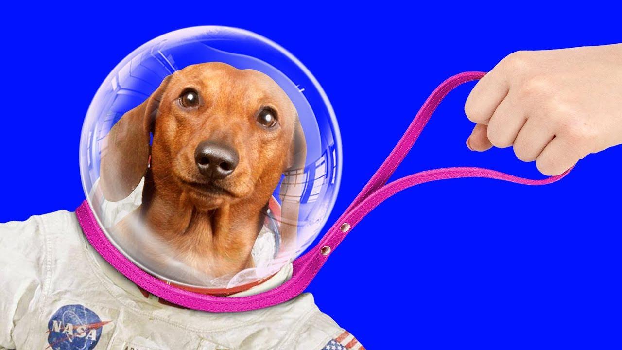 13 Paw-sitively Creative DIY Crafts & DIY Pet Hacks / Simple Life Hacks