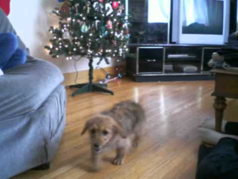 Puppy Tries To Jump On Couch