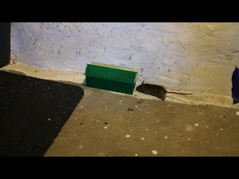 Best Live Mouse Trap? Mouse Hotel in Action - Full Test & Review