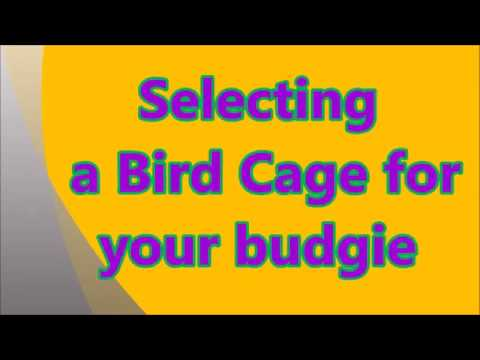 Selecting a Bird Cage for Your Budgie