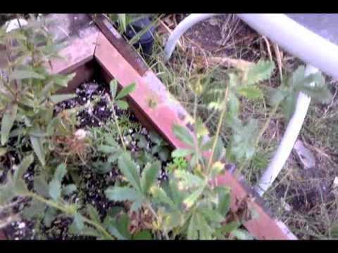 Herb Magic - Adventures in Plant Matter Pt4.wmv