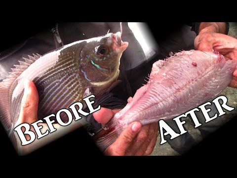 *Graphic* This was a Dangerous Fishing Trip. BIG Perch, new way to Gut a Fish all in One Video!
