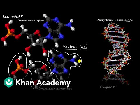 Introduction to nucleic acids and nucleotides