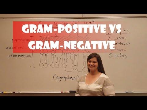 Gram Positive Bacteria vs  Gram Negative Bacteria