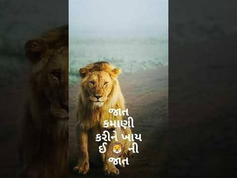 સિંહ કોને કહેવાય?   New Gujarati WhatsApp