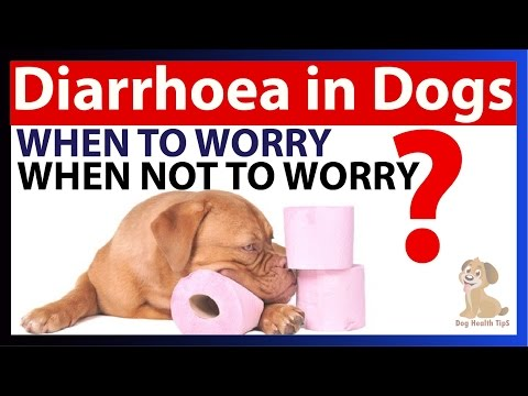Dog Diarrhea Causes, Symptoms, and Treatment (dog health tips)