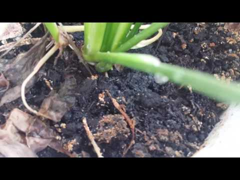Small white crawling insects on my house plant soil