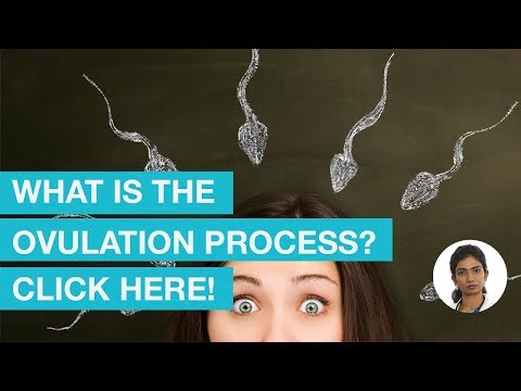 How does Ovulation process work? Know more!