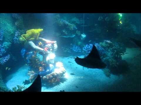 Atlantis Submarine Voyage on-ride HD POV, Legoland Windsor