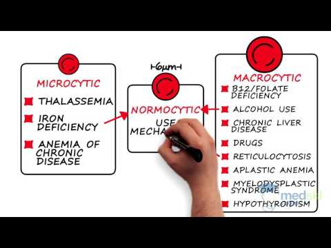 Hematology – Anemia: By Karima Khamisa M.D.