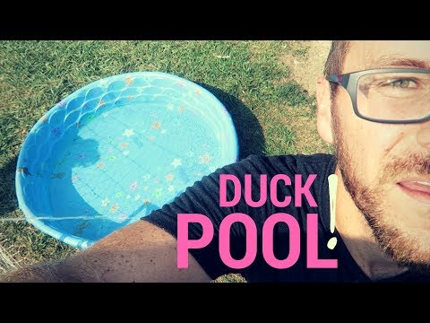 Why Won't Our Ducks Use The Pool?