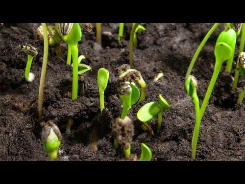105# How to germinate flower seeds successfully || seeds germinate tips & care