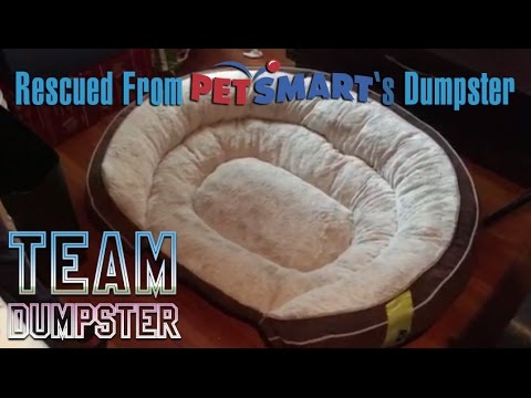 Rescuing The Top Paw Orthopedic Dog Bed Found in Petsmarts Dumpster | Team Dumpster