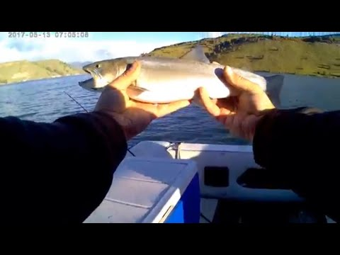 Fishing For Bull Trout (some Explicit Language) lake billy chinook