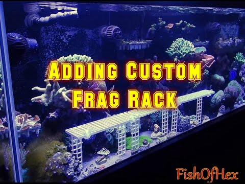 Making Room For Frags With Custom Rack | Reef Tank