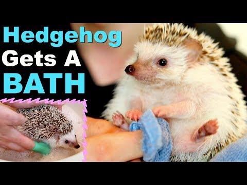 Giving My Hedgehog a Bath!
