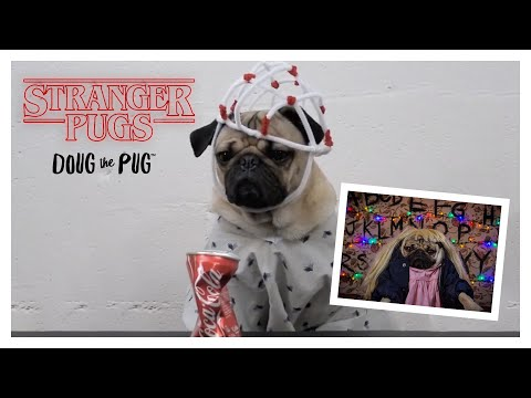 Stranger Pugs - Doug The Pug
