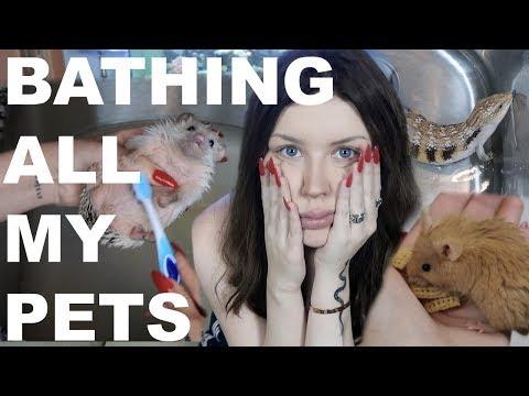 I Tried to Bathe All My Pets