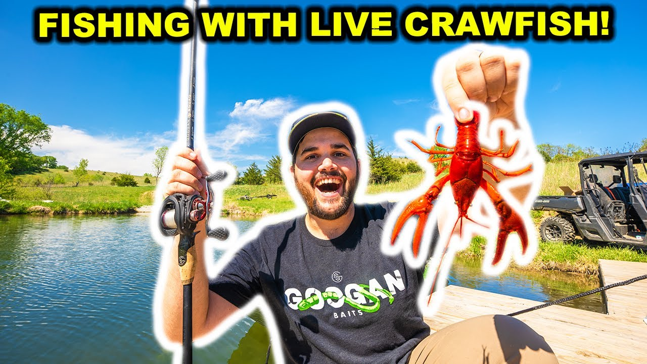 Fishing with GIANT LIVE CRAWFISH in My BACKYARD POND!