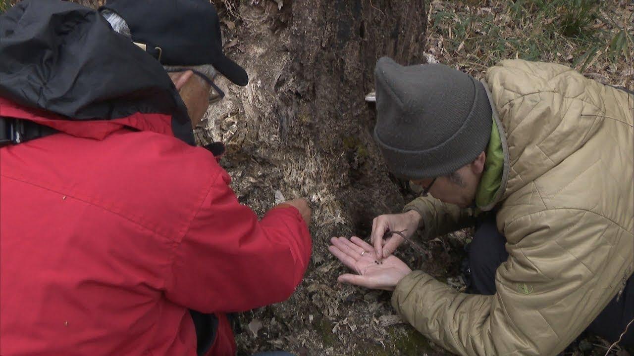【特集】生き物大好き記者が追う!今回のテーマは「冬の生き物 岡山県南部の里山や水辺で発見」