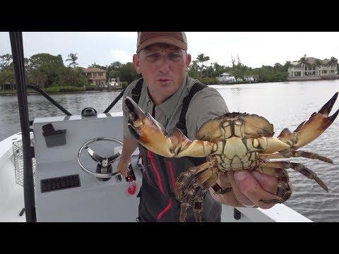 CRAB {Catch Clean Cook} Blue Crab, King Crab, Snow Crab, Stone Crab, Dungeness Crab- TASTE TEST
