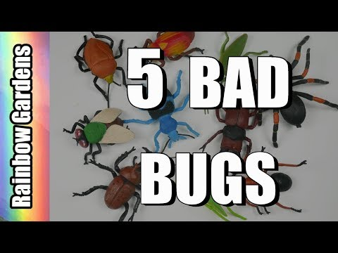 5 Bad Bugs and How to Rid Them from Your Garden - Aphids, Scale, Worms, Beetles