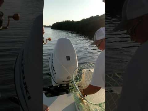 Big redfish in Tampabay FL. Pocket change inshore fishing charters