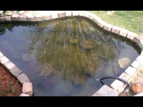 Koi Pond Algae Problem