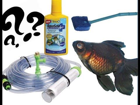 Goldfish Tank Maintenance