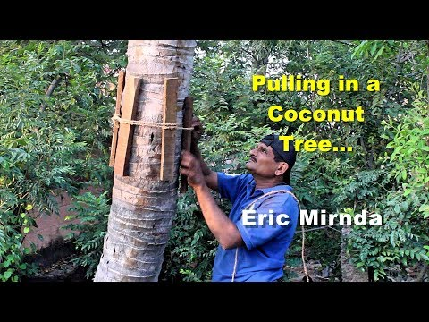 How to pull in a coconut tree - Eric Mirnda