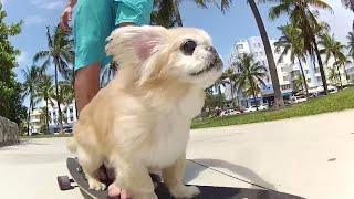 Longboarding Dog