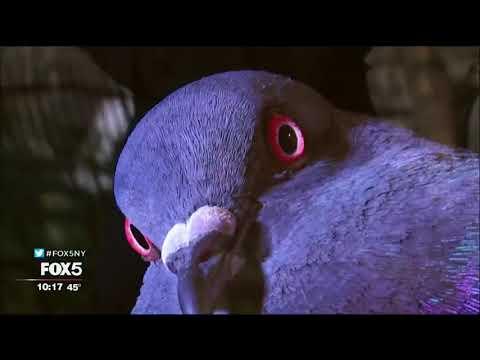 NYC Photographer Andrew Garn: Pigeons Get No Respect