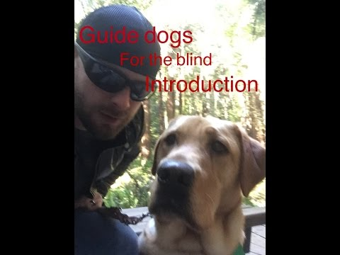 Guide dogs for the blind introduction