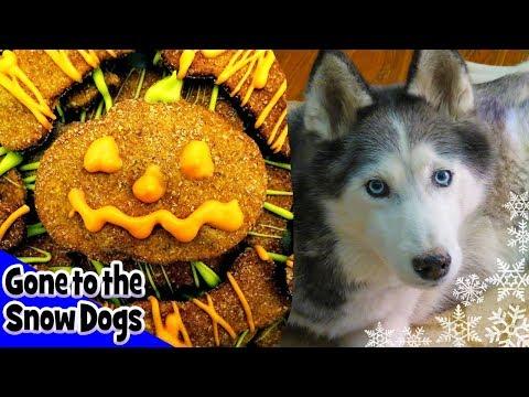 PUMPKIN AND PEANUT BUTTER DOG TREATS   DIY Dog Treats Halloween   Snow Dogs Snacks 14